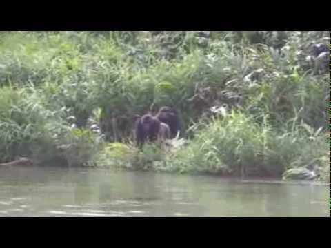 Dreng møder gorillaer igen efter 12 år