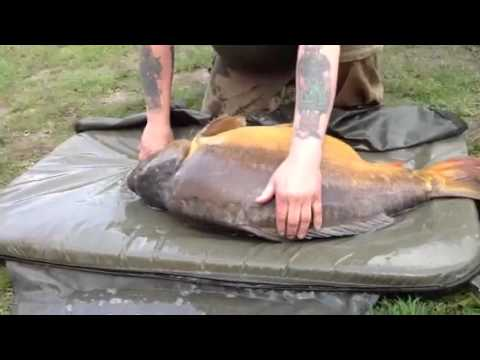 VALLEE LAKE  BIG 56LB + Mirror Carp May 12'