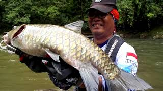 Video Berburu Mahseer di kota pedalaman kalimantan MP3, 3GP, MP4, WEBM, AVI, FLV Oktober 2018