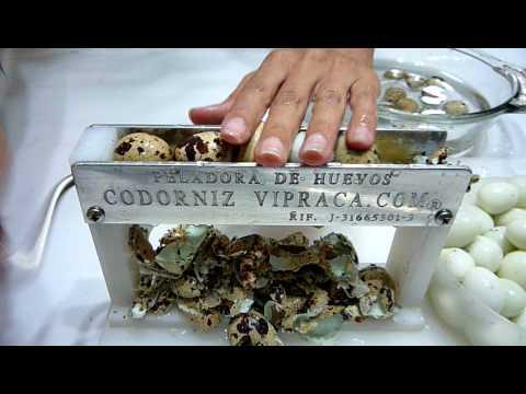 Peeling machine quail eggs / Peladora / Descascadora de Huevos de Codorniz Vipraca.MOV