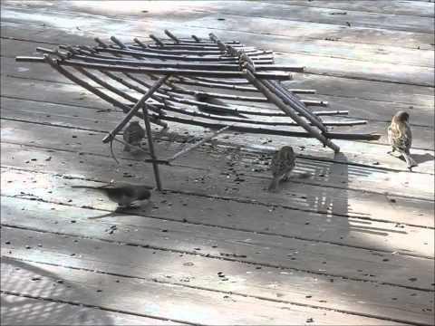 Ловушки для фазана своими руками фото