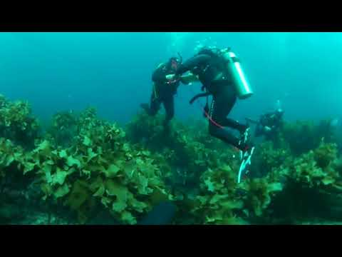 Diving in the Poor Knights in New Zealand
