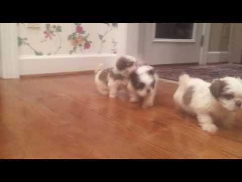 LuLu loves to run around the house with her sisters