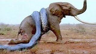 Video 14 CRAZIEST Animal Fights Caught On Camera MP3, 3GP, MP4, WEBM, AVI, FLV November 2018