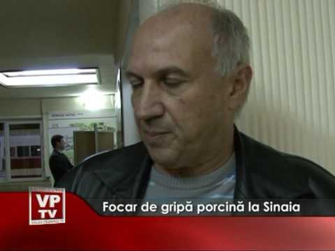 Focar de gripă porcină în Sinaia