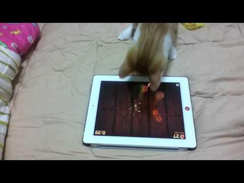 神奇貓咪用iPad玩切水果!好可愛!