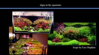 Algae in the planted aquarium - Systems design and control