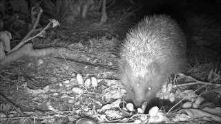 Wildlife Trail Camera - 31.8.2016