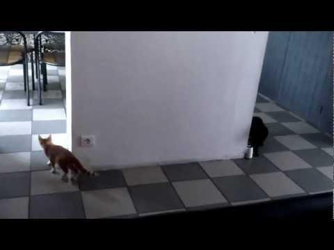 gatti giocano a nascondino! ma guardate che succede!