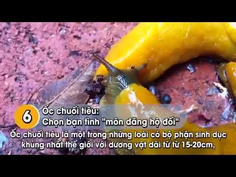 Tập tính của loài Ong (full)