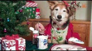 Собаки готовятся к новому году