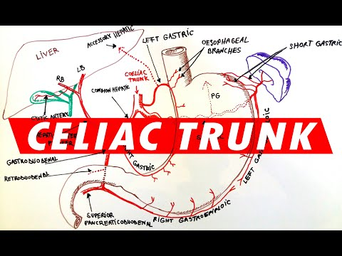 Search Results For Good Superior Mesenteric Artery Diagram 2018