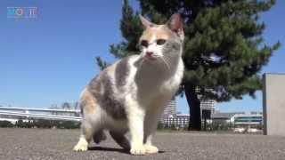 ドロップ/映画『先生と迷い猫』インタビュー