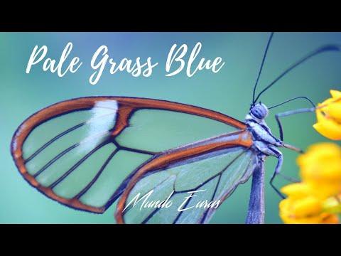 Enya - Pale Grass Blue (Tradução) HD Video