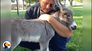 Baby Donkey Asks For More Hugs  | The Dodo