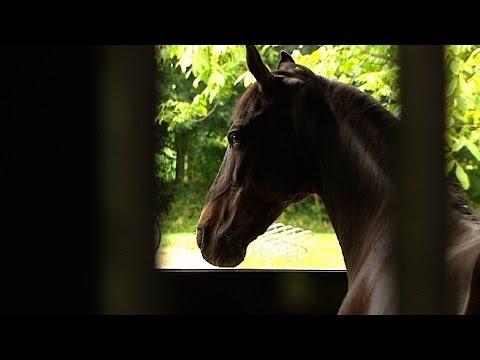 Politie volop bezig met onderzoek paardenmishandelingen