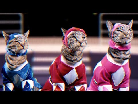 Mighty Morphin Meower Rangers - Meowphin Time! - Episode 1