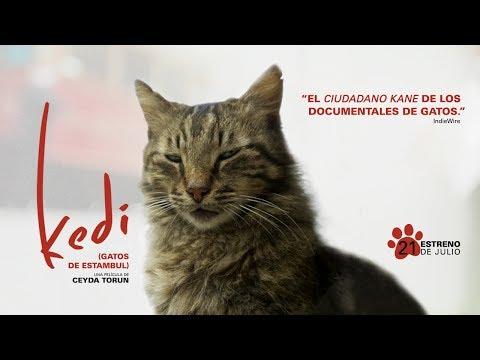 Kedi (Gatos de Estambul) - tráiler oficial VOSE?>