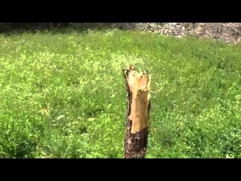 Distrutto dai vandali l'albero della pace