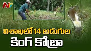 Rare 14-Feet Long King Cobra Creates Panic In Public, Rescued In Visakhapatnam
