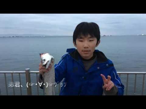 【大型タチウオ回遊!?】南芦屋浜リアルタイム