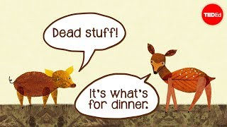 Dead stuff: The secret ingredient in our food chain (TED-Ed)