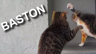 Video BASTON - PAROLE DE CHAT MP3, 3GP, MP4, WEBM, AVI, FLV Mei 2018