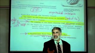 CARDIAC PHYSIOLOGY; PART 1 By Professor Fink.wmv