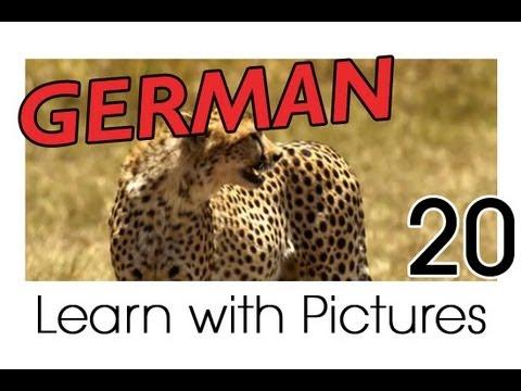 Learn German – Safari Animals Vocabulary