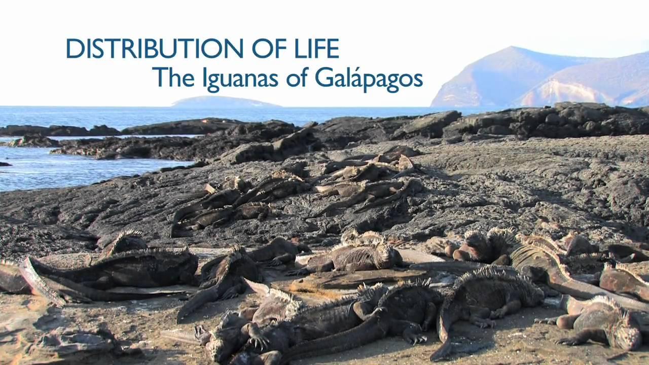 Leguáni na Galapágách