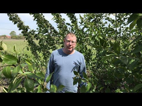 Agroforst in Brandenburg: »Der Spinner mit den Bäumen ...