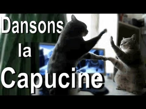 Singing French Cats