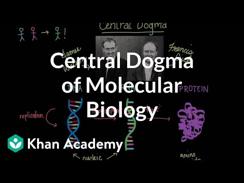 Central Dogma Of Molecular Biology Video Khan Academy