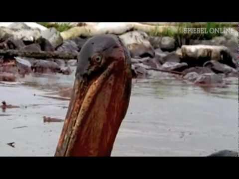 """""""Deepwater Horizon"""": BP muss Rekordstrafe zahlen"""