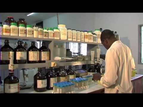 IITA - A documentary on IITA-Cameroon Station which is one of the 10 IITA Stations in Sub Saharan Africa,and also a host to some other institutions which include CI...