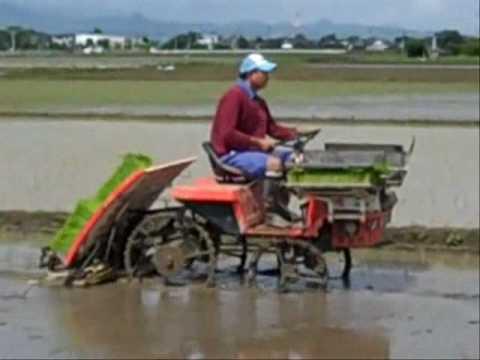 Planting Rice.wmv