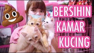 Video CLEAN THE CATS ROOM - BERSIHIN RUANGAN KAMAR KOTORAN KUCING SENDIRIAN [ SHARING IS CARING ] MP3, 3GP, MP4, WEBM, AVI, FLV Juni 2019