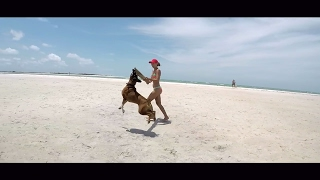 Gopro Karma Grip: https://goo.gl/n2IDtiDrone: https://goo.gl/32a7Q1Gopro Hero5: https://goo.gl/HfRjGqCanon G7X: https://goo.gl/vsm5ZOGerman Boxer Dog is enjoying the Florida Beaches.Honeymoon Island Florida..Tampa Bay.Subscribe to my Channel and enjoy more amazing Videos of Florida..ThanksCheck out my German Vlog Channel: https:www.youtube.com/c/FloridaLifestyleVlogsMusic by https://soundcloud.com/nowemusic/love