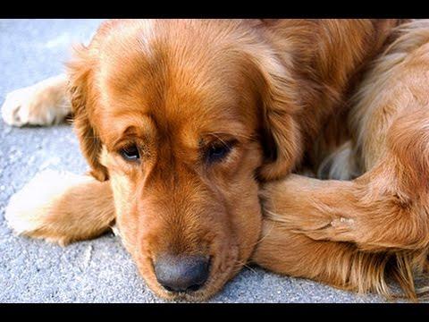 這隻狗狗跟主人分隔3年之後終於重逢,牠的反應讓我開始懷疑附近是不是有人在切洋蔥了。