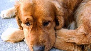 Pies stanął w bezruchu gdy ujrzał swojego właściciela po 3 latach rozłąki. Ale gdy podszedł bliżej? Zwierzak totalnie oszalał!