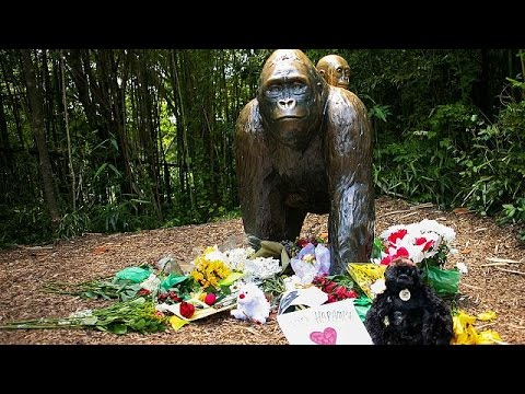ΗΠΑ: Θύελλα αντιδράσεων για τη θανάτωση του γορίλα Χαράμπε