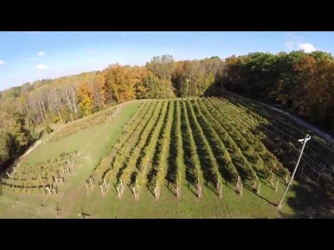 Winery For Sale - Lake Cumberland Winery & Vineyard For Sale