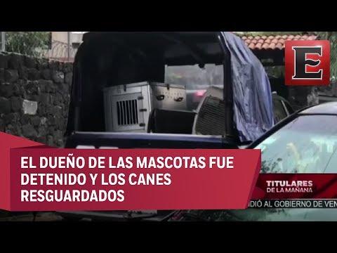 Niña de tres años muere por ataque de perros en Coyoacán