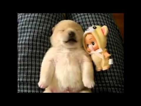 Tierno Perrito durmiendo y soñando