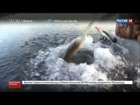 Провалился под лёд  Смертельная рыбалка  Почему люди рискуют и тонут из-за рыбы  - DomaVideo.Ru