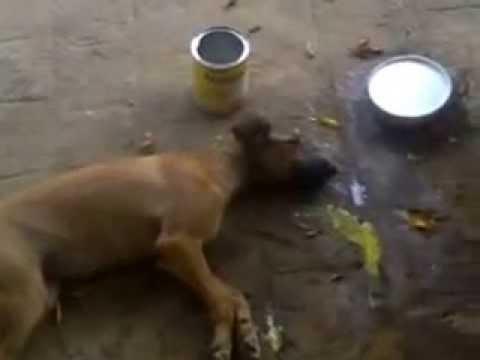 Cachorro agonizando em Zabelê