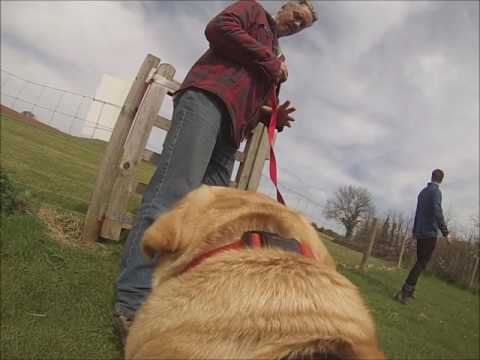 Dog GoPro At Whitehill Country Park