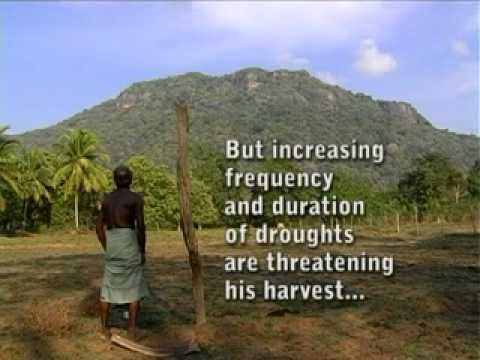 Climate Change & Paddy Cultivation