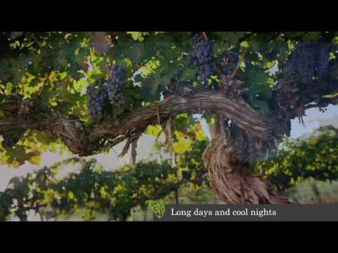 Mercer Estates Winery Video 2017