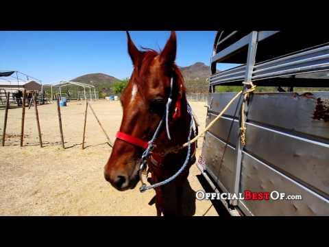 Best Horseback Riding in Arizona 2011 - Spur Cross Stables
